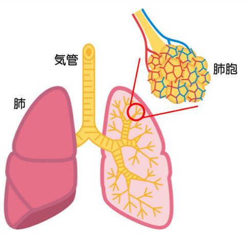 水 病気 に 溜まる 肺 が